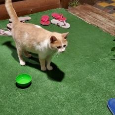Найдена кошка с ошейником потерялась на отдыхе